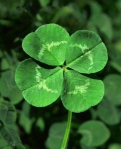four-leaf-clover-image